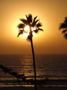 Manhattan Beach Pacific Ocean Sunset Golden Sun behind Palm