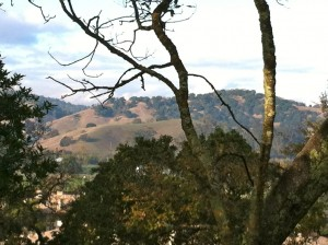 The Wine Country of Marin As Seen from the Apartment