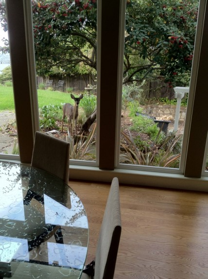 Deer from the kitchen window