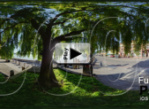 Sausalito Weeping Willow Tree Pano Play Button