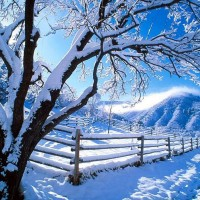 Winter, Snow, Fence