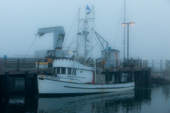 Caledonian Fog 572x381 photo in the post: Bitten By Bodega Bay Bug, at www.timtyson.us