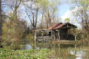 Shack in a Louisiana Swamp